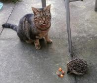 About Me. Bella and Hedgehog